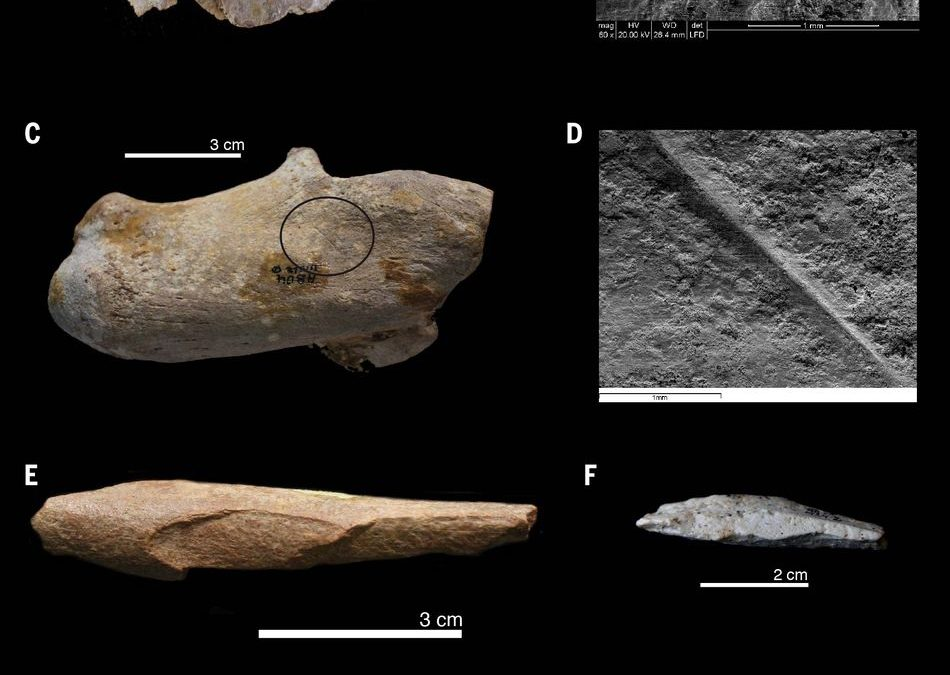 Human ancestors may have spread to north Africa